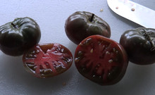 tomto seeds