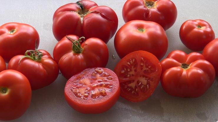 Placero Tomato, Solanum lycopersicum