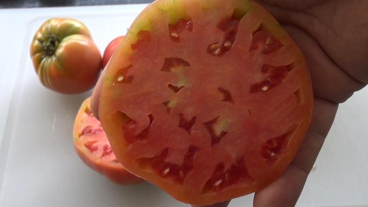 RUSSIAN ROSE TOMATO, Solanum lycopersicum